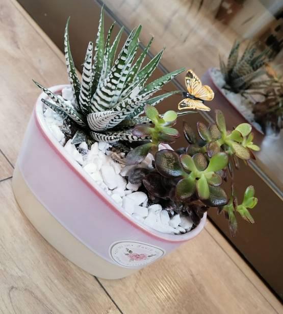 Fancy Succulent-1